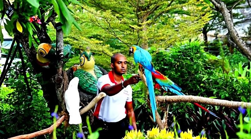 amazonski-gozd