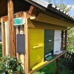 Rešitev za tehtanje čebeljih kolonij