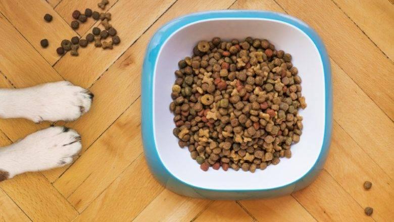 Kakovostna hrana za pse vseh pasem